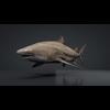 06 08 43 75 car studio lemon shark v10 1 0000 4