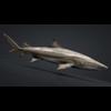 06 08 44 318 car studio lemon shark v10 1 0007 4