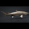 06 08 44 33 car studio lemon shark v10 1 0006 4