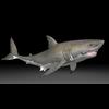 17 09 04 773 sharkpic88 4