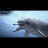 17 01 11 264 dolphin 01 4
