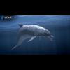 17 01 11 811 dolphin 07 4