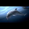 17 01 11 968 dolphin 04 4