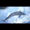 17 01 12 19 dolphin 05 4