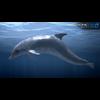 17 01 12 22 dolphin 06 4