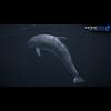 17 01 12 261 dolphin 08 4