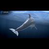 17 01 12 445 dolphin 10 4