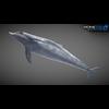 17 01 12 477 dolphin 12 4
