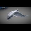 17 01 12 479 dolphin 11 4