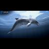 17 01 12 4 dolphin 03 4