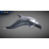 17 01 12 845 dolphin 15 4