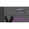 17 01 13 279 dolphin 21 4