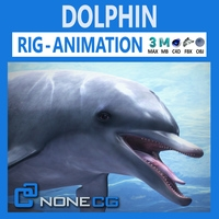 Animated Bottlenose Dolphin 3D Model