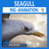 Animated Seagull Unity 3D Model