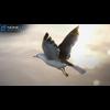 10 07 39 415 seagull unity 01 4