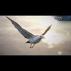 10 07 39 457 seagull unity 02 4