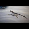 10 07 39 459 seagull unity 05 4