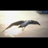 10 07 39 469 seagull unity 04 4
