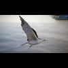 10 07 39 471 seagull unity 03 4