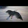 10 07 39 93 seagull unity 06 4