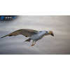 10 07 39 962 seagull unity 08 4