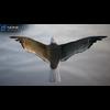10 07 40 2 seagull unity 09 4