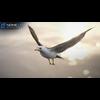 10 07 40 563 seagull unity 07 4
