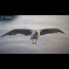 10 07 41 380 seagull unity 12 4