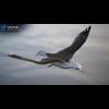 10 07 41 439 seagull unity 11 4