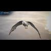 10 07 41 8 seagull unity 10 4