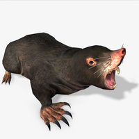 3D Mole Animated 3D Model