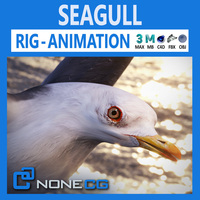 Animated Seagull 3D Model