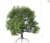 Broadleaf Tree 001 3D Model