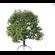 Broadleaf Tree 001 3D Model