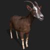 21 02 55 427 goatdisplaypic 4