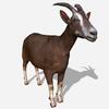 21 03 02 885 goatdisplaypic2023 4