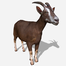 3D Goat Animated 3D Model