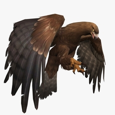 3D Eagle Animated 3D Model