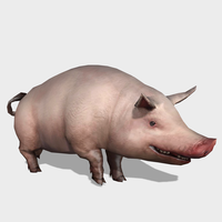 3D Pig Animated 3D Model