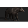 18 09 04 256 bearpic4 4