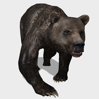 3D Grizzly Bear Animated 3D Model