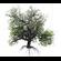 Broadleaf Tree 002 3D Model