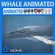 Animated Whale 3D Model