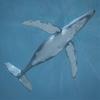 10 07 59 70 whale 03 4
