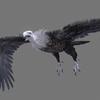 10 13 38 399 vulture white 0001 4
