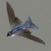 10 19 48 633 swallow 03 4