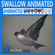 Animated Swallow 3D Model