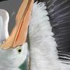 10 24 10 501 pelican 09 4