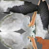 10 24 10 720 pelican010 4