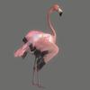 10 32 20 528 flamingo 05 4